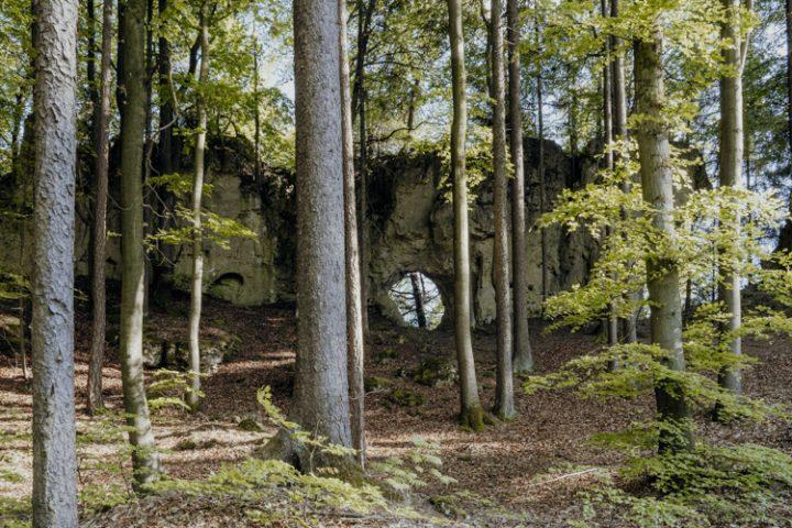 Wanderwege im Nürnberger Land – Tipp 3: Wandern auf dem Zauberwald-Orchideenweg