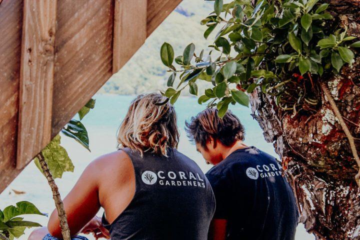 Coral Gardeners Moorea Französisch Polynesien