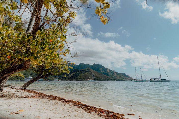 Opunohu Bay Moorea Französisch Polynesien