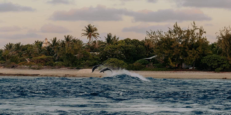 Rangiroa Urlaub – Tipps & Sehenswürdigkeiten für das Atoll   Reisehappen