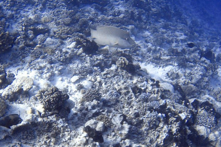 Rangiroa Tauchen und Schnorcheln – die faszinierende Unterwasserwelt der Tuamotu Inseln