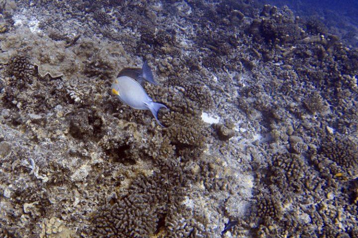Tauchen auf Tikehau – die faszinierende Unterwasserwelt der Tuamotu Inseln