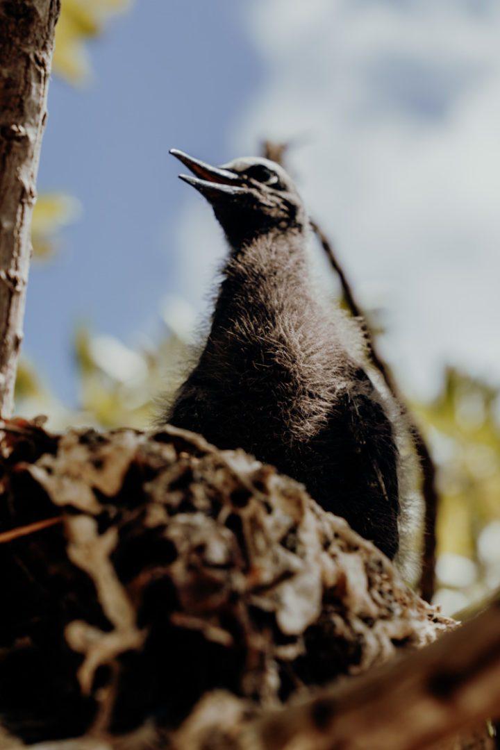 Ein Ausflug zur Île aux oiseaux – Motu Puarua Tikehau Tuamotus