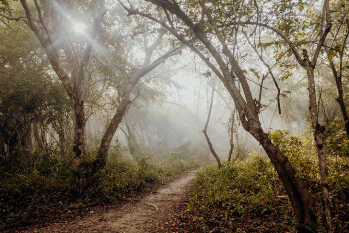 Der Weg zur Playa Libre – Isla Grande