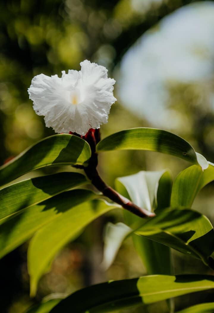 Barney's Flowers & Hummingbird Garden Negril