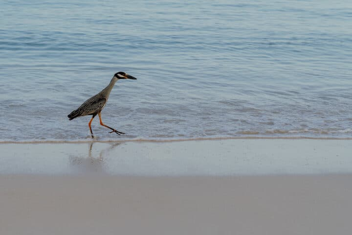 Seven Mile Beach Jamaika