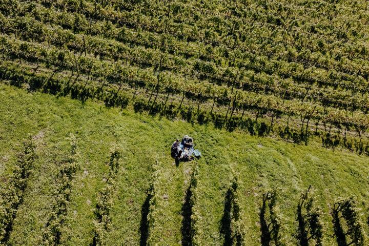 Unterwegs in den Weinbergen des Weingut Haug in Lindau am Bodensee